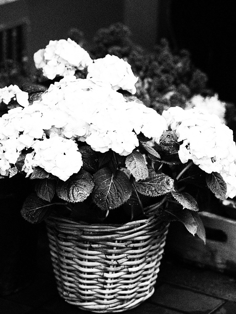 Life of Yablon monochrome images